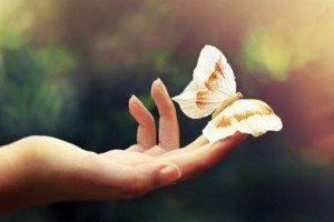 instant-présent-papillon