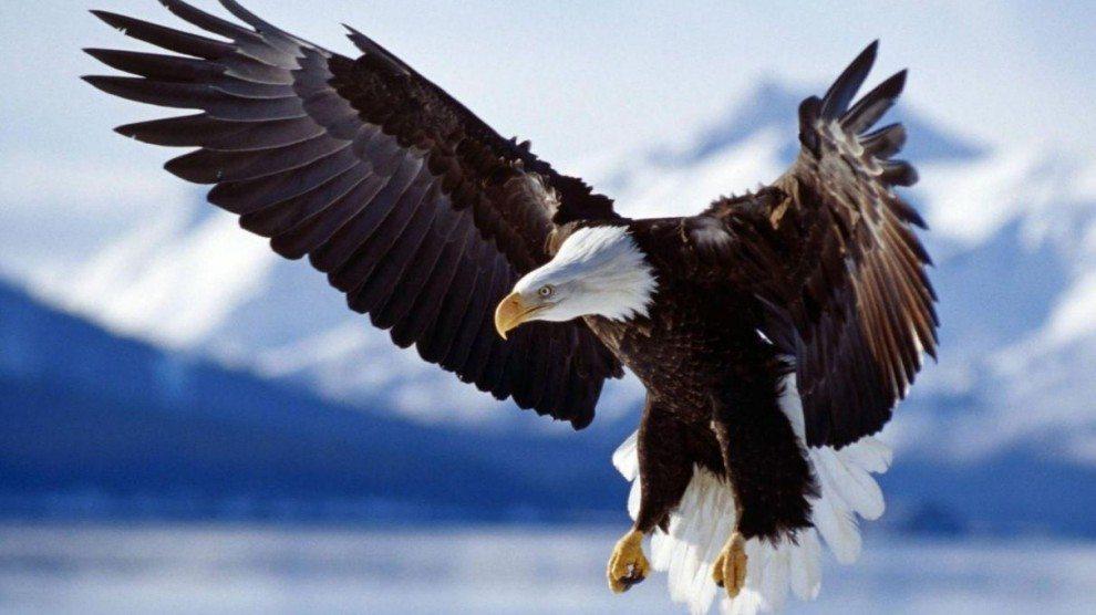 Exceptionnel Méditation de l'Archange Michaël – Vol sur les Ailes d'un Aigle  IK06